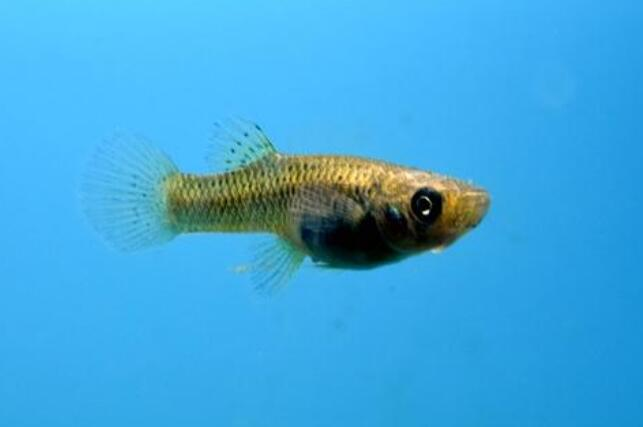 Why are fish not afraid of cold in cold water?